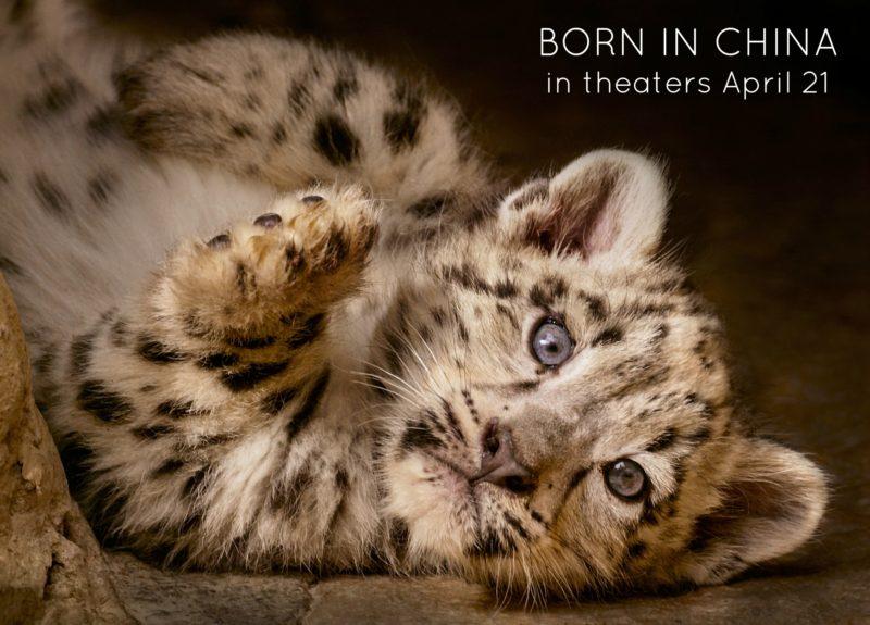 Take an extraordinary safari trip to see rare locations in China this Friday #BornInChina
